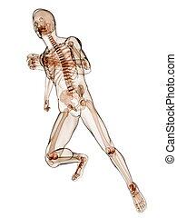 τρέξιμο , σκελετός