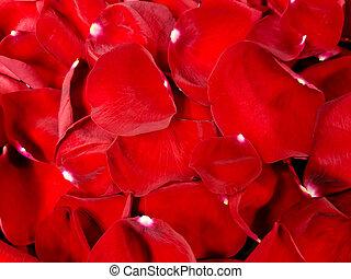 τριαντάφυλλο , αριστερός φόντο , πέταλο άνθους