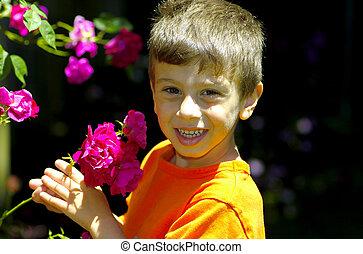 τριαντάφυλλο , κήπος