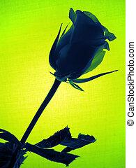 τριαντάφυλλο , πράσινο