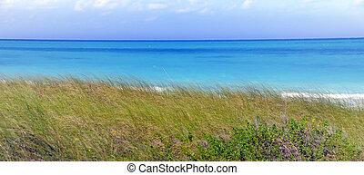 τροπικός , γρασίδι , πράσινο , θάλασσα