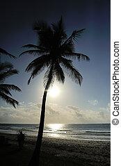 τροπικός , ηλιοβασίλεμα , πάνω , παραλία