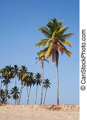 τροπικός , καρίδα , ακρογιαλιά άμμος , δέντρα