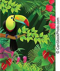 τροπικός , οπωροφάγο πτηνό με μέγα ράμφο , δάσοs