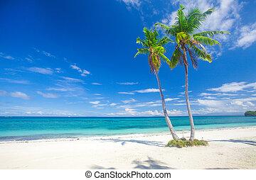τροπικός , πανοραματικός , καρίδα , παραλία , βάγιο