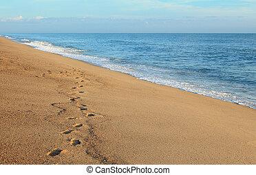 τροπικός , σιάμ , παραλία