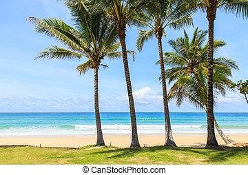 τροπικός , σιάμ , παραλία , phuket