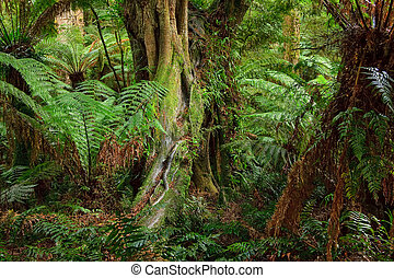 τροπικό δάσος , αυστραλία