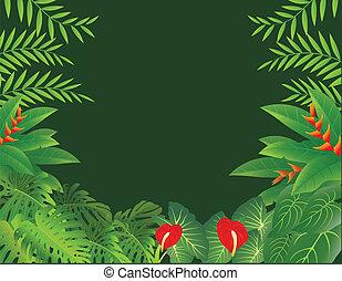 τροπικό δάσος , φόντο