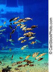 τροπικό ψάρι