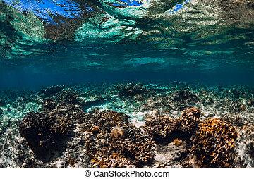 υποβρύχιος , σκηνή , οκεανόs , τροπικός , κοραλλένιο χρώμα , γαλήνιος