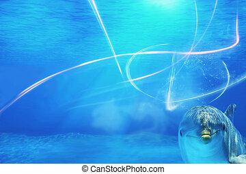 υποβρύχιος , φόντο , με , δελφίνι
