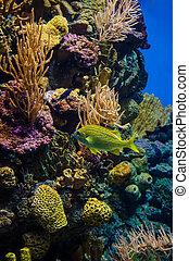 υποβρύχιος , caribbean , κόσμοs