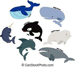 φάλαινα , μικροβιοφορέας , θέτω