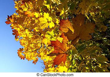φθινοπωρινός , arboreal., όμορφος