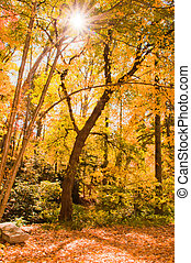φθινόπωρο , ήλιοs , δάσοs , ακτίνα