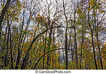 φθινόπωρο , ήλιοs , ουρανόs , δάσοs