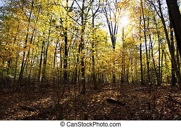 φθινόπωρο αναδασώνω , δέντρα