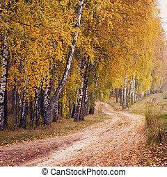 φθινόπωρο αναδασώνω , δρόμοs