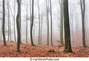φθινόπωρο , αντάρα , δάσοs , δέντρα