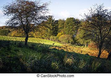 φθινόπωρο , απόσταση , ελάφι , τοπίο