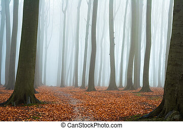 φθινόπωρο , ασαφής , οξυά , δάσοs