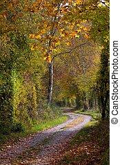 φθινόπωρο , ατραπός , διαμέσου , δάσοs