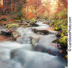 φθινόπωρο , βουνό , δάσοs , carpathian., stream.