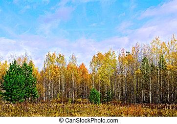 φθινόπωρο , γαλάζιος ουρανός , δάσοs