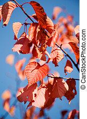 φθινόπωρο , γεμάτος χρώμα