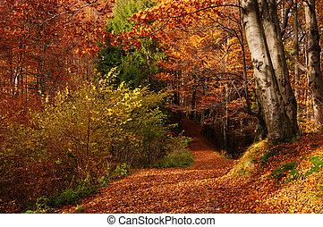 φθινόπωρο γραφική εξοχική έκταση , δάσοs , φύλλωμα