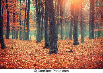φθινόπωρο γραφική εξοχική έκταση , δέντρα , και , leaves., πέφτω , σκηνή