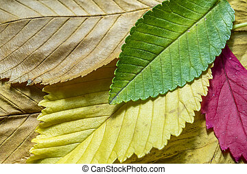 φθινόπωρο , γραφικός , φύλλα , πλοκή , φόντο