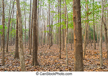 φθινόπωρο , δρόμοs , γριά , δάσοs , δέντρα