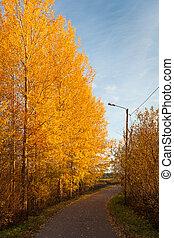 φθινόπωρο , δρόμοs , χρωματιστός φυλλοειδής διακόσμηση