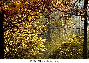 φθινόπωρο , ελαφρείς , διαμέσου , φύλλωμα , ήλιοs