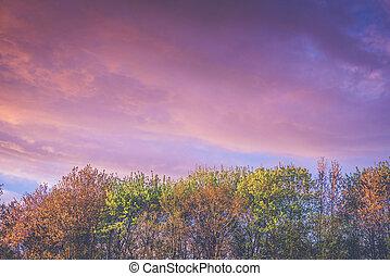 φθινόπωρο , μπογιά , ανατολή , δέντρα , βιολέττα