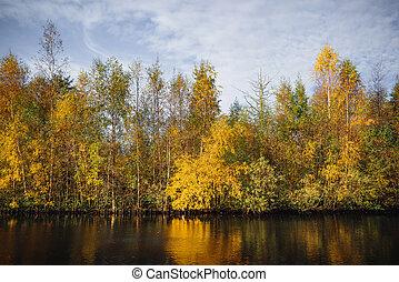 φθινόπωρο , μπογιά , δέντρα , κίτρινο , πέφτω
