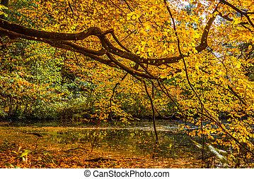 φθινόπωρο , πάνω , δέντρο , λίμνη