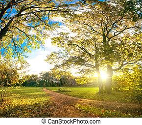 φθινόπωρο , πάρκο