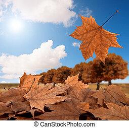 φθινόπωρο , πανόραμα