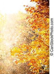 φθινόπωρο , σφένδαμοs , δέντρα , φόντο