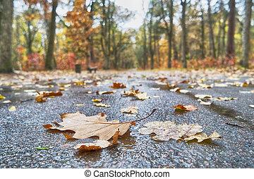 φθινόπωρο φύλλο , δρόμοs