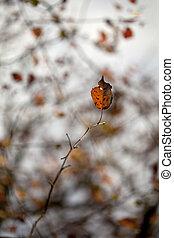 φθινόπωρο φύλλο , επάνω , ελαφρείς , φόντο
