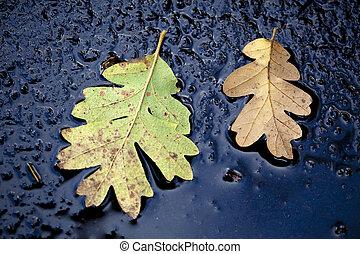 φθινόπωρο φύλλο , επάνω , μπετό