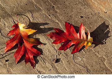 φθινόπωρο φύλλο , επάνω , πέτρα