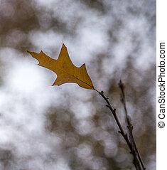 φθινόπωρο φύλλο , με , μπόλικος , από , bokeh