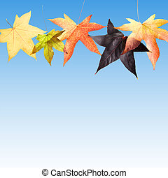 φθινόπωρο φύλλο , πέφτω