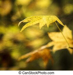 φθινόπωρο φύλλο , φόντο
