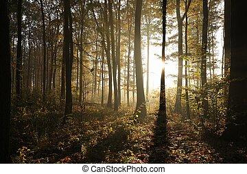 φθινόπωρο , χαράζω , δάσοs